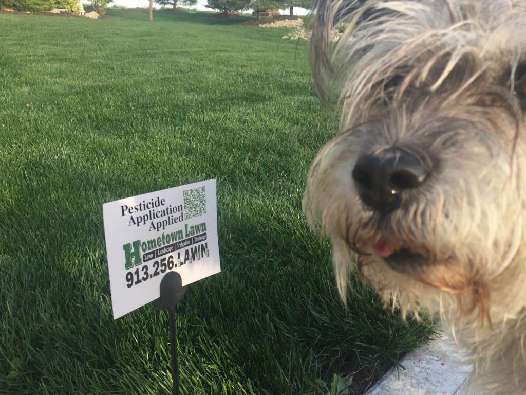 Pet safe lawn fertilizer treatments